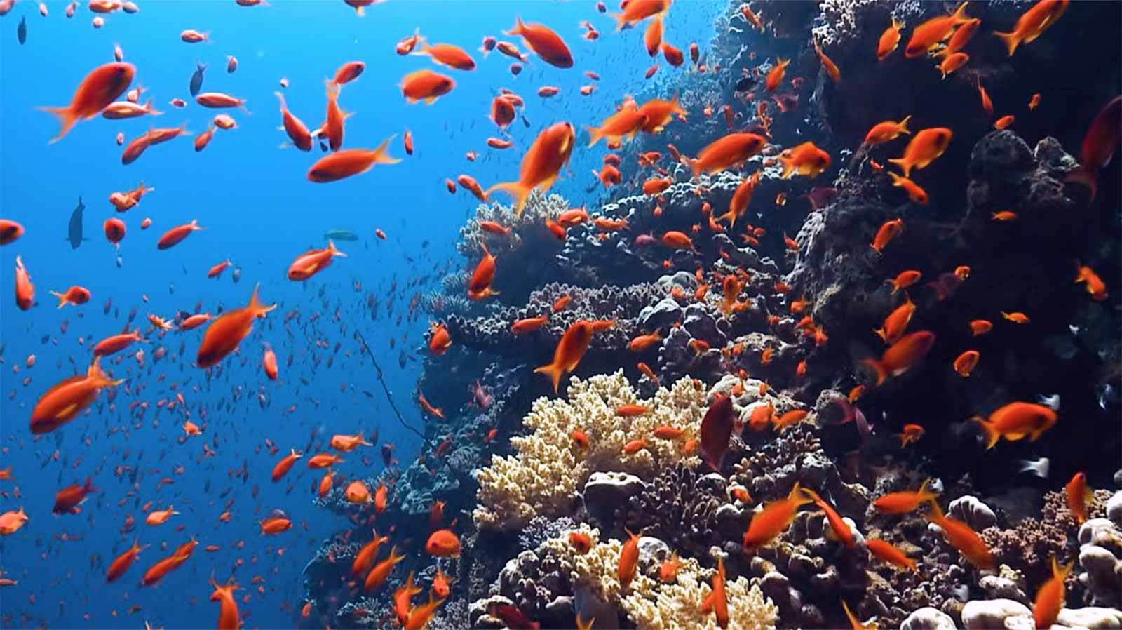 is your sunscreen killing the coral reef ocean conservancy