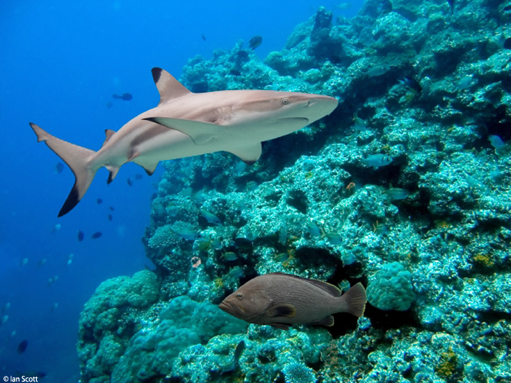 Best to Be Aware, Rather than Beware, of Sharks - Ocean ...