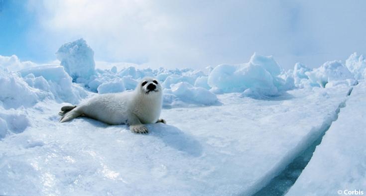 Arctic sea animals