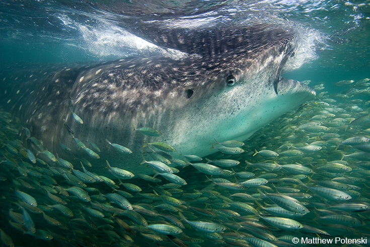 Thanks to you fish conservation swims forward ocean for Fish swimming backwards