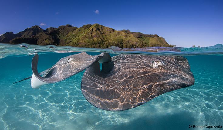 Image of: Extinct Ocean Conservancy Help Protect Endangered Species Ocean Conservancy