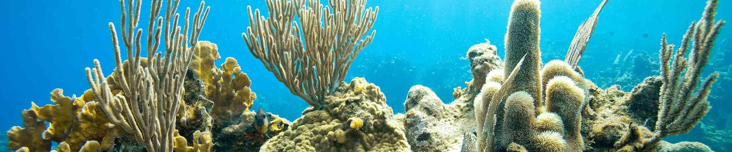 coral ocean conservancy