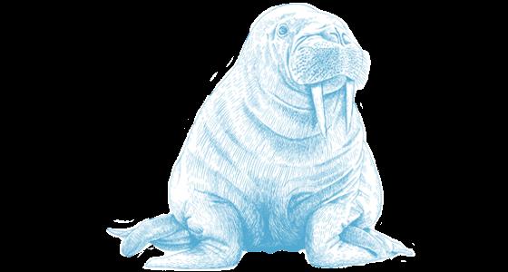 walrus ocean conservancy