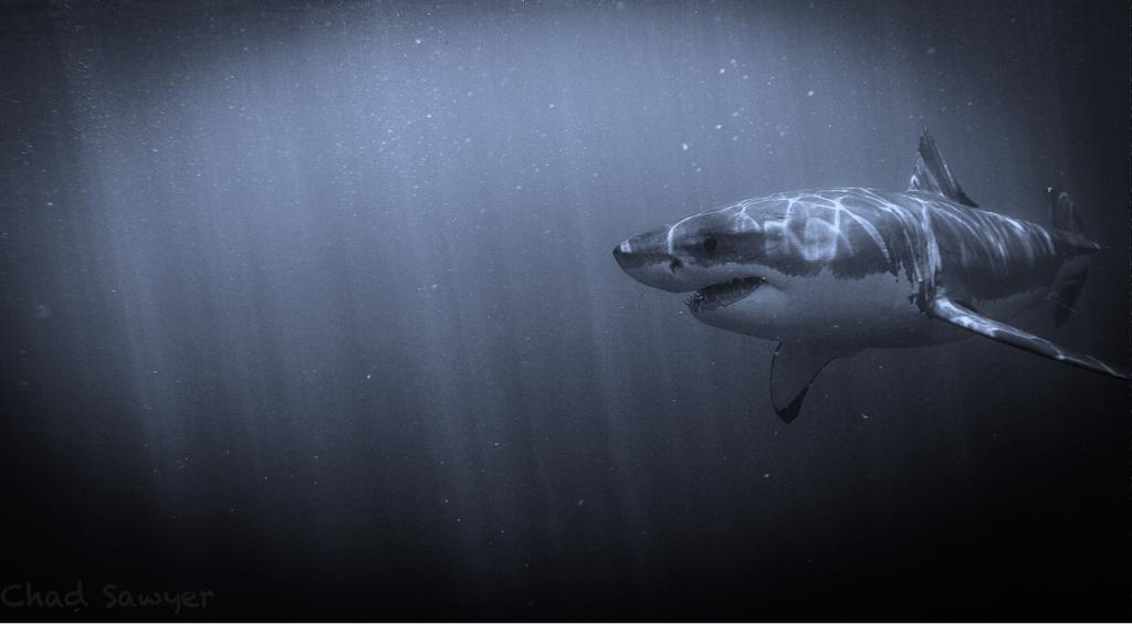 Ocean Horror Story: Urban Legends of the Sea - Ocean Conservancy