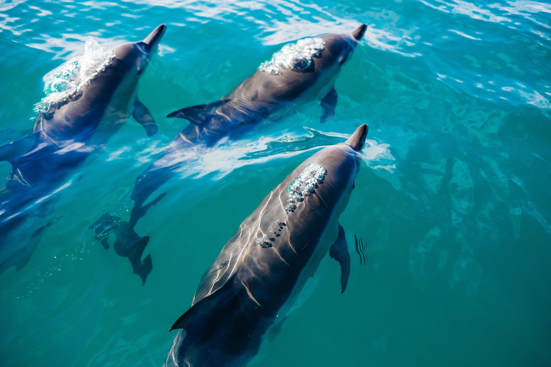 Marine mammals pictures - photo#30