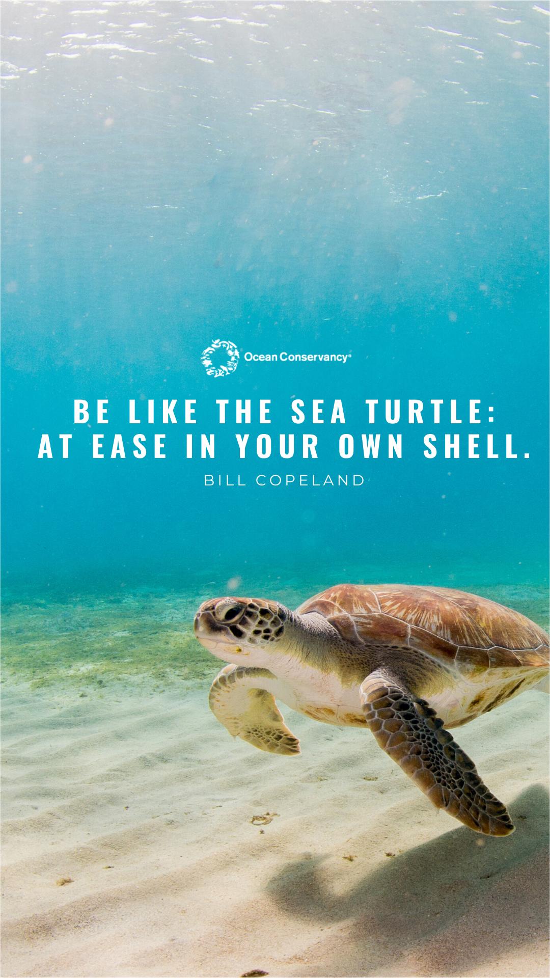 Stunning Ocean Wallpapers To Brighten Your Day Ocean Conservancy