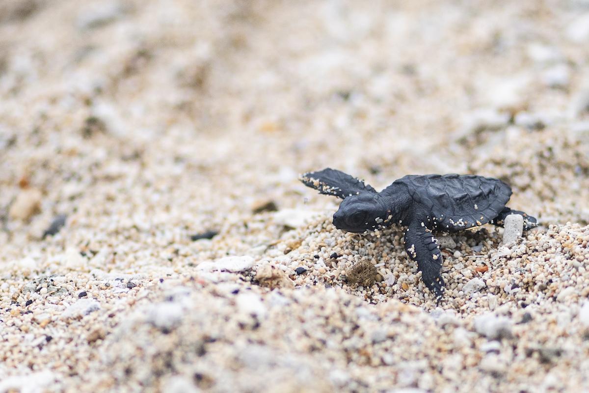 3 dicas para fotografar eticamente a vida selvagem marinha 22